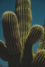 Close up saguaro